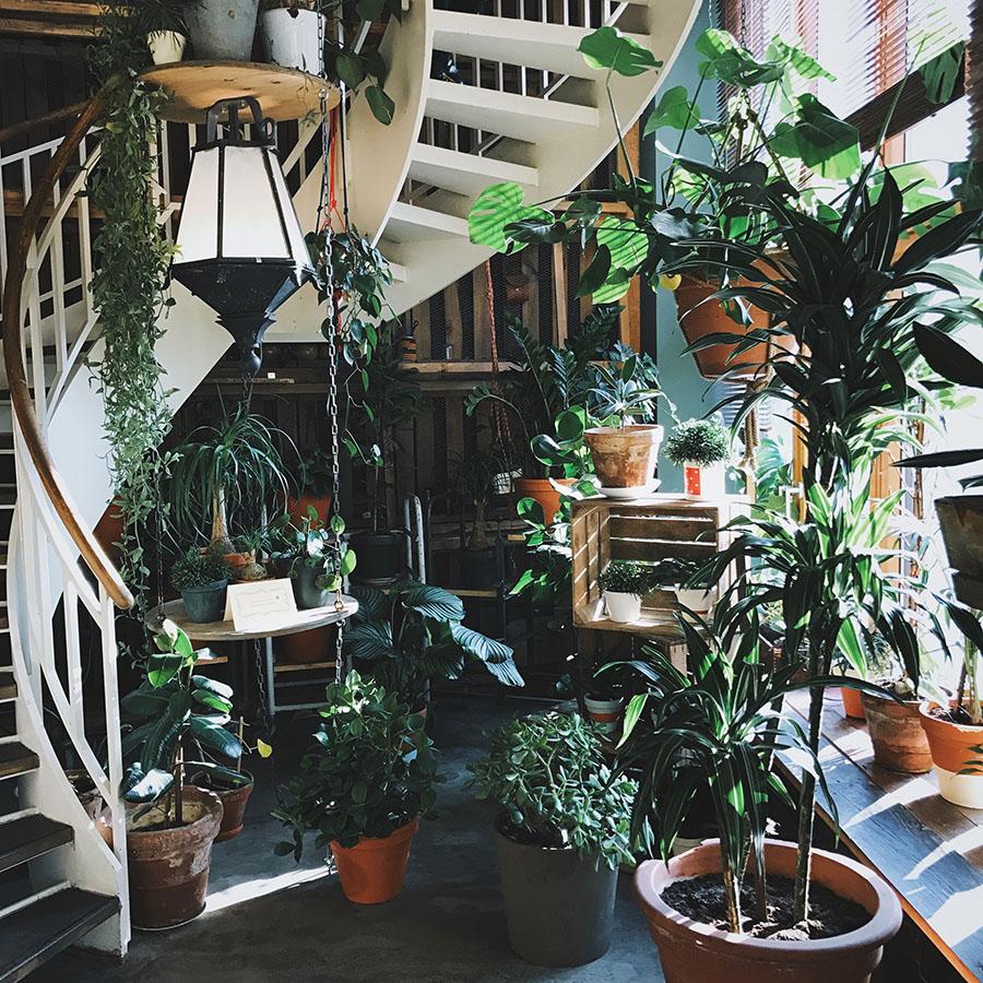 6 rastlín do každého interiéru
